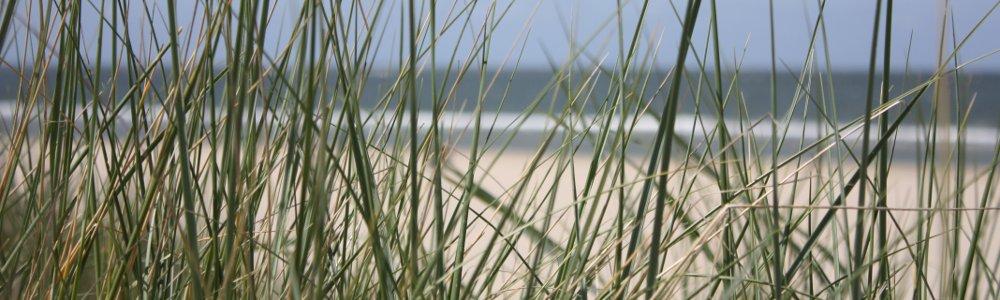 Sommerlager in Nippes & Bilderstöckchen